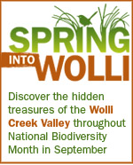 Spring into Wolli