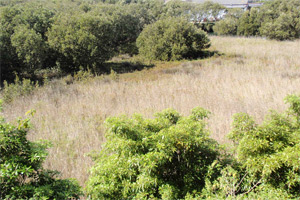 Undercliff wetland
