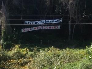 "Banners hanging in bushland ""Save Wolli Bushland Stop WestConnex"""