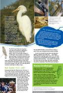 panel 14 - birdlife